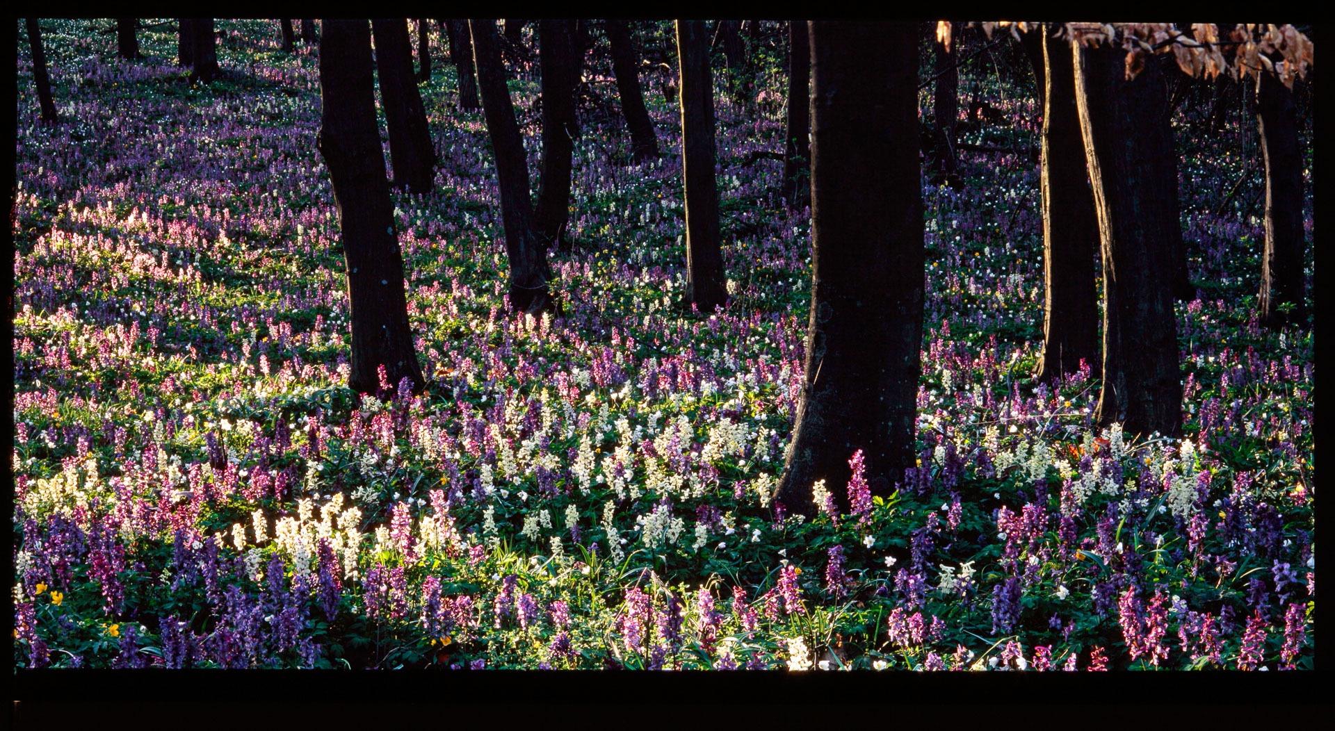 Erdők napja – Galéria